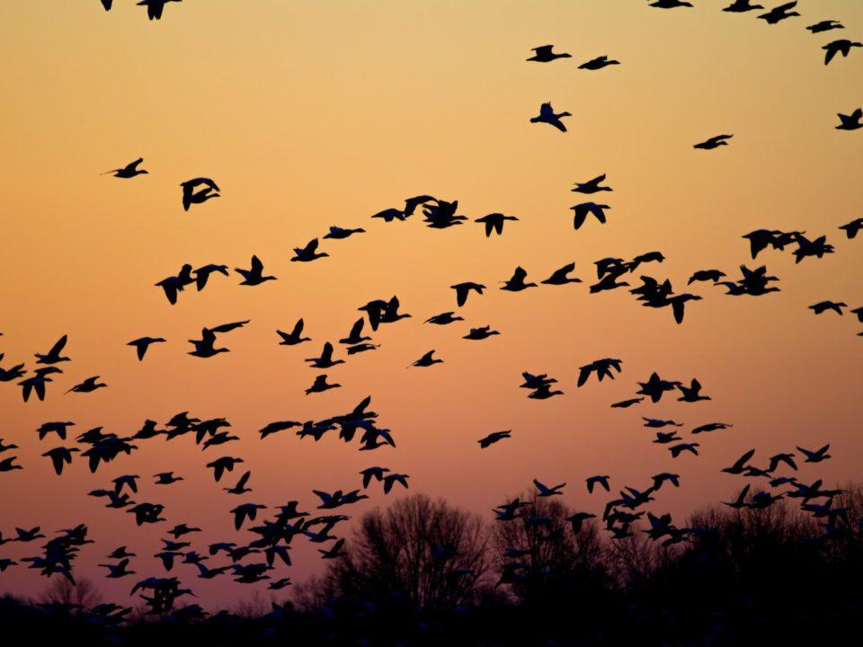 Photo migration
